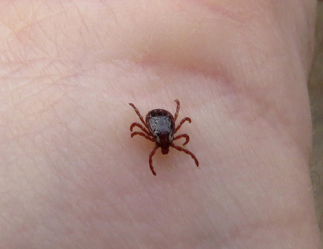 Photo of Top U.S. Cities Bothered by Ticks