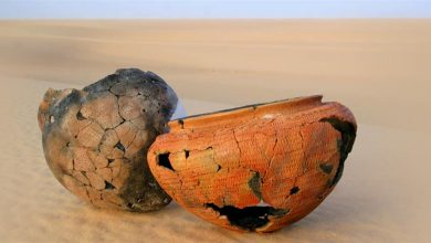 Photo of What did ancient people eat? Scientists find new clues in old pottery